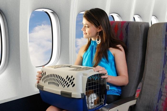 Сколько стоит перелет для животных?