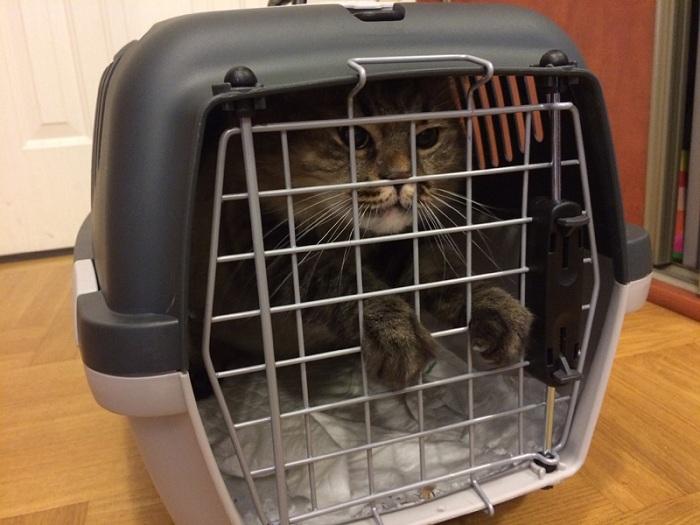 Условия перевозки животных