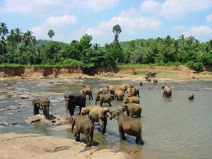 Почему многие российские туристы выбирают Шри-Ланку