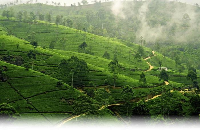 Сколько лететь из Уфы в Шри-Ланку